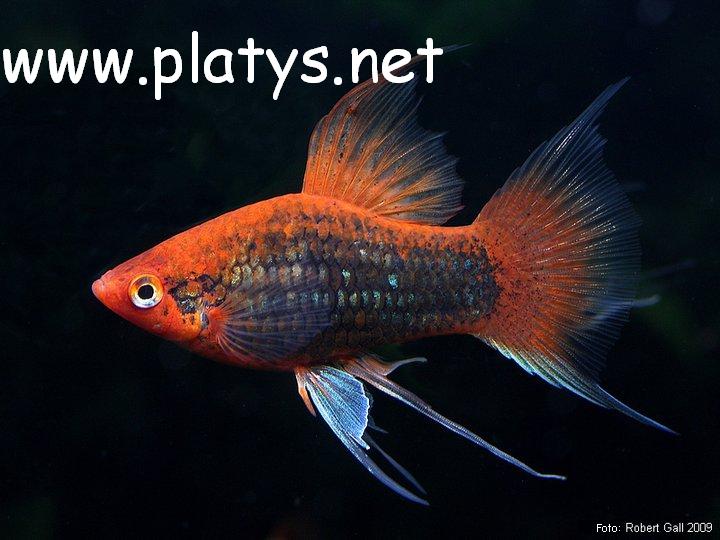 www.platys-net
