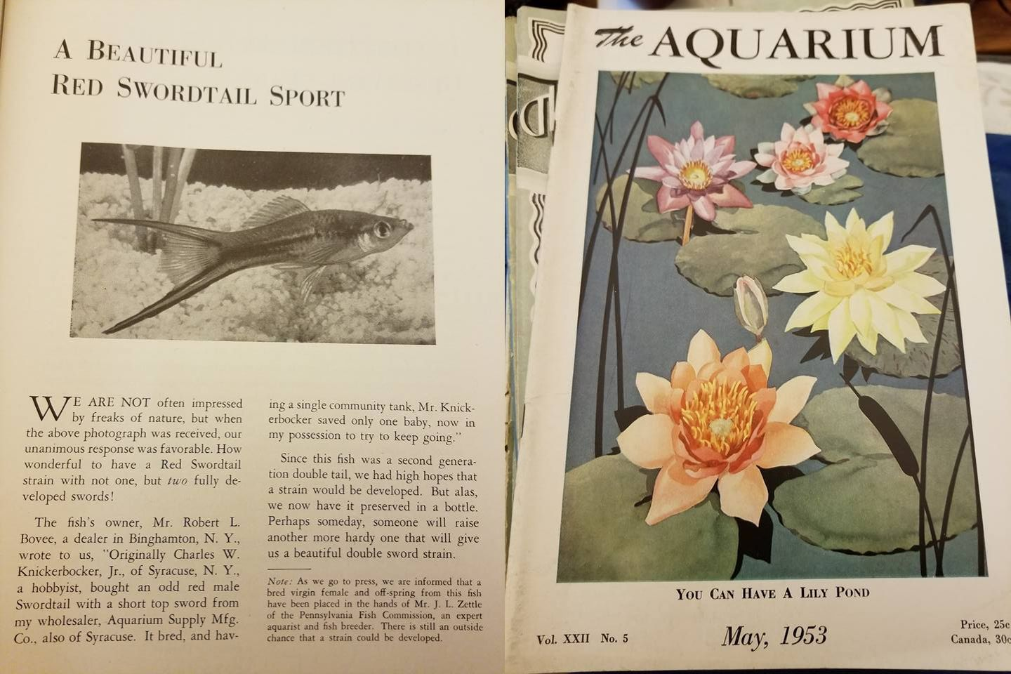 """The Aquarium"" Mai 1953"
